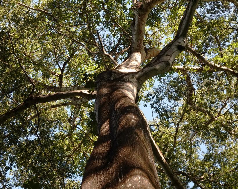 bomen in natuurreservaat Nosara