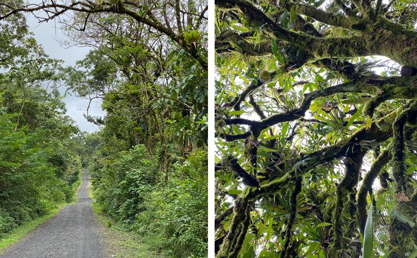 weg van Brasilia naar het regenwoud van Dos Rios
