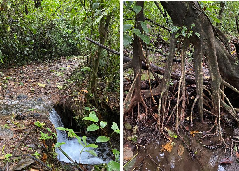 vegetatie wandelpad Dos Rios