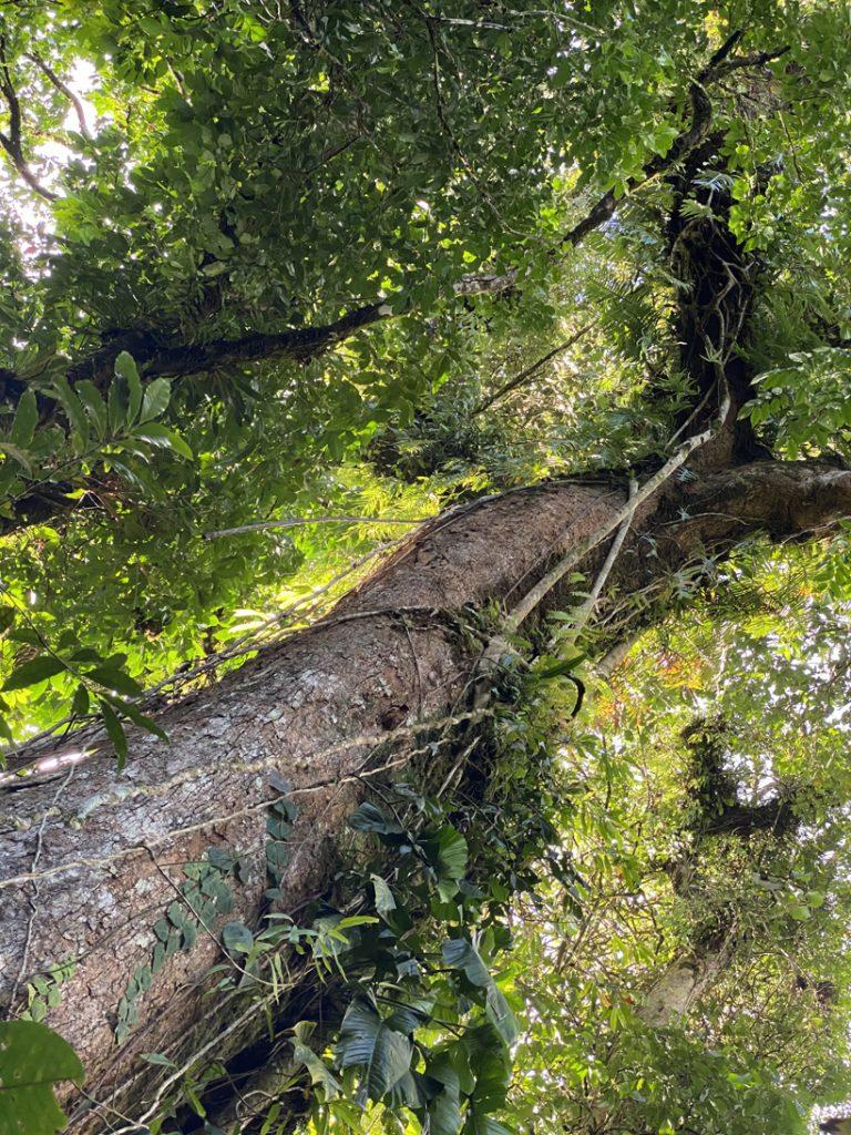 vochtig regenwoud Dos Rios