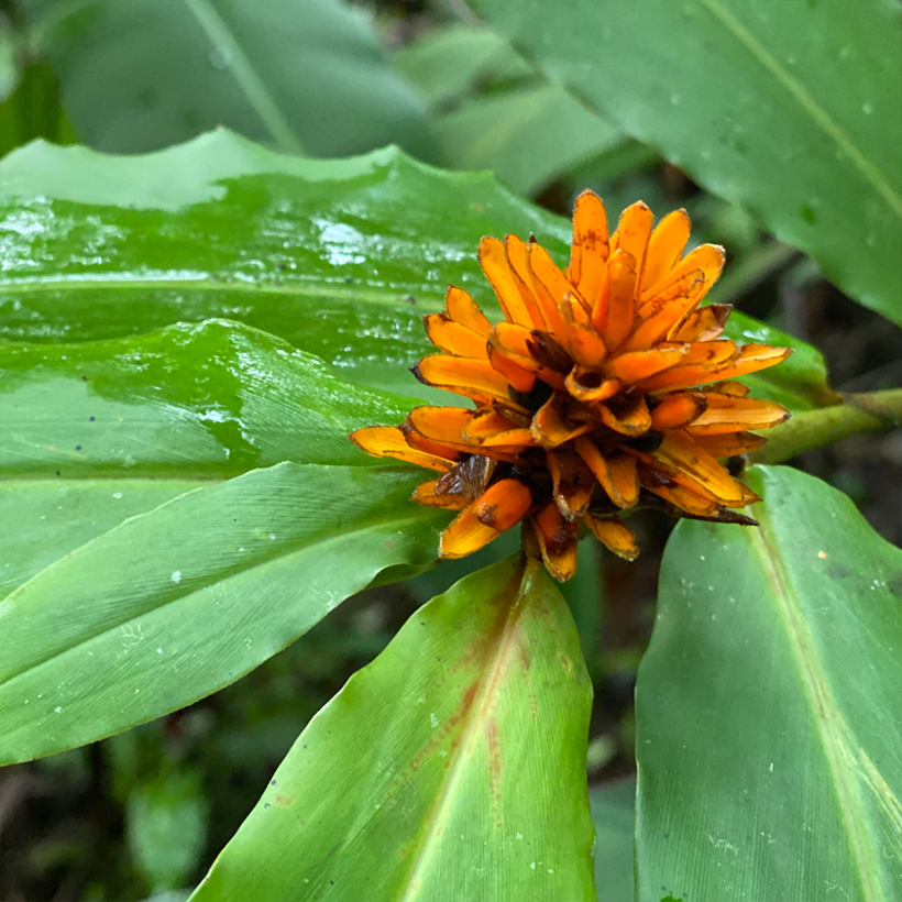 oranje bloem regenwoud