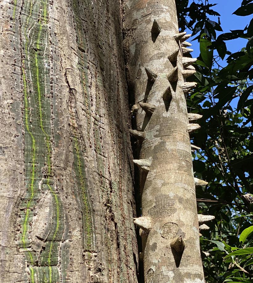 mooie stammen in Costa Rica