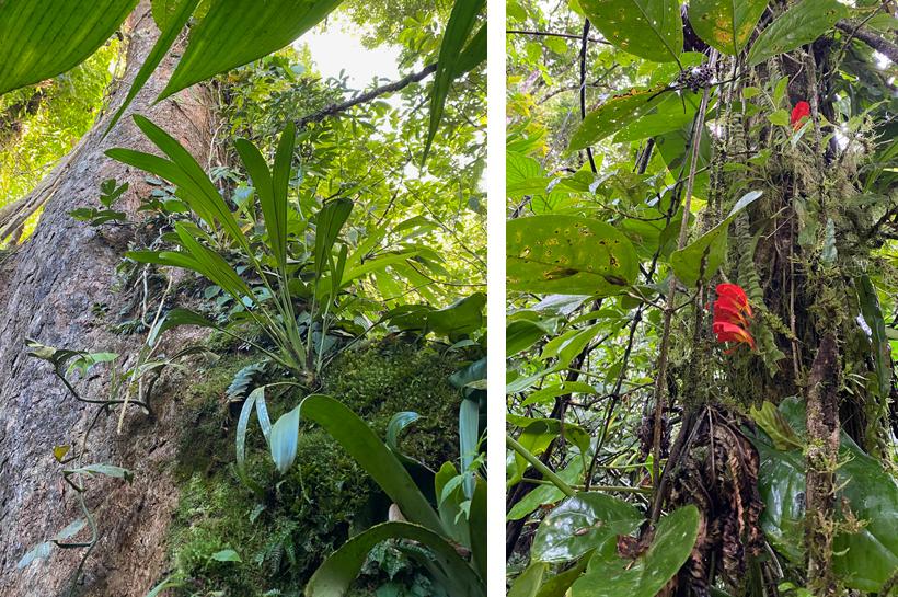 tropische flora in Dos Rios