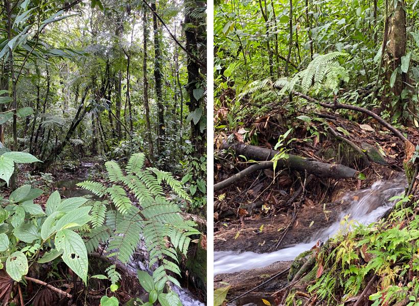 water in regenwoud Dos Rios
