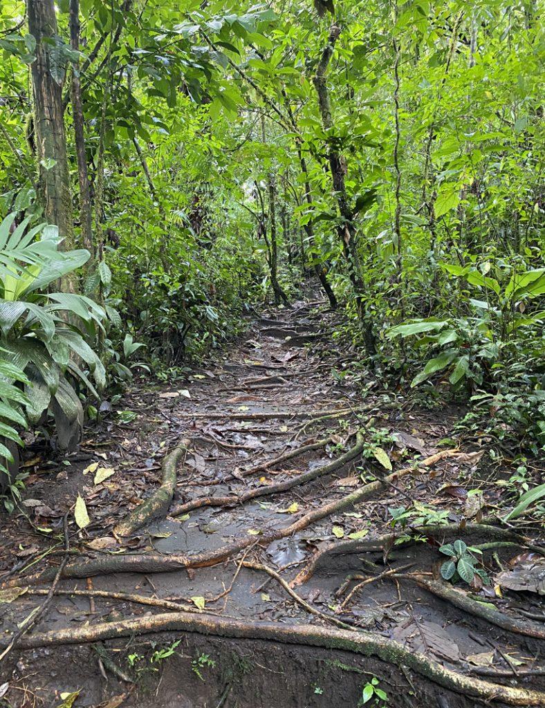 wandelpad naar Bromelias hot springs Dos Rios