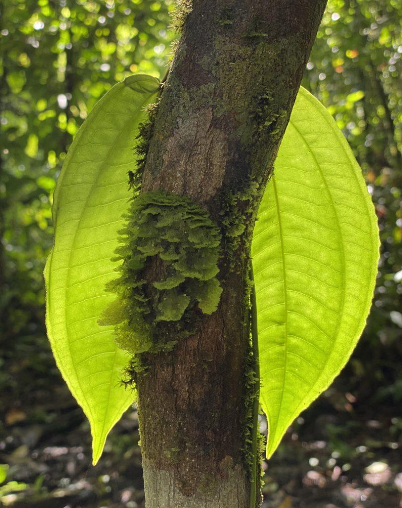 licht en mos in regenwoud