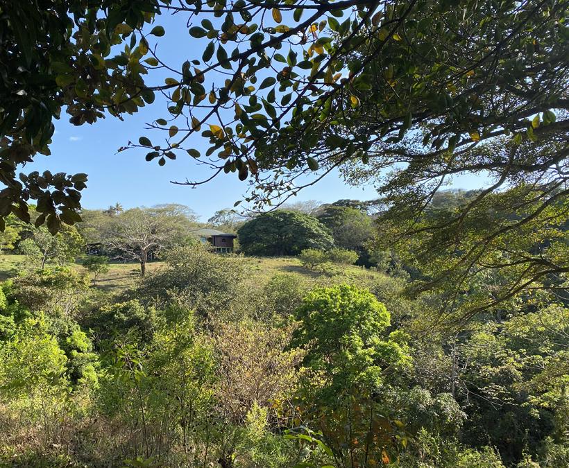 Pipilacha groene oase in Miramar