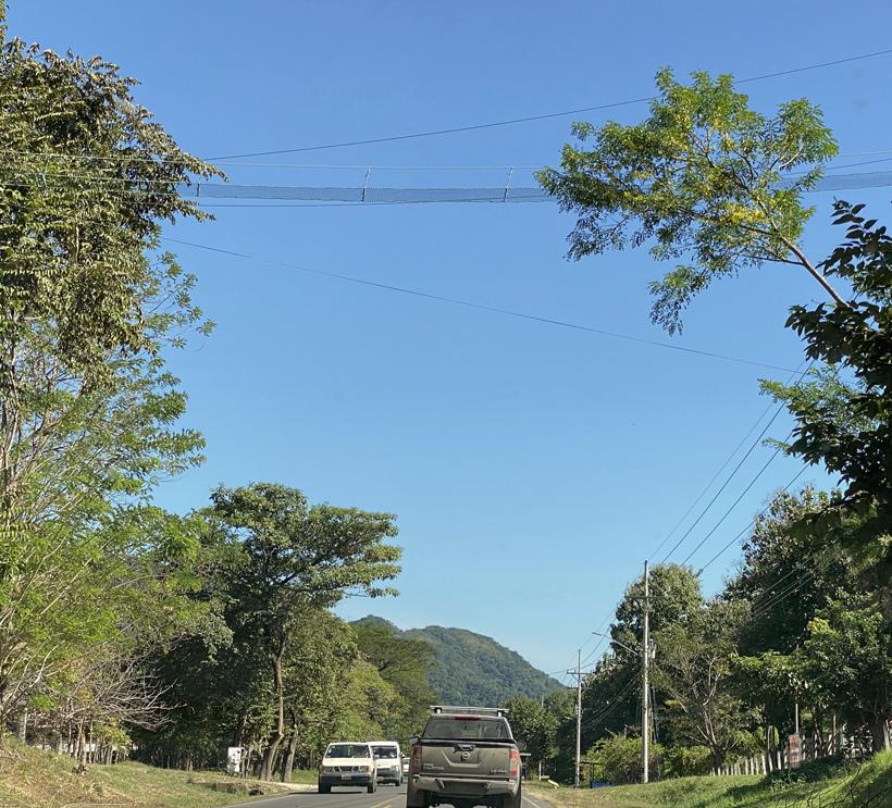 apenbrug Nicoya
