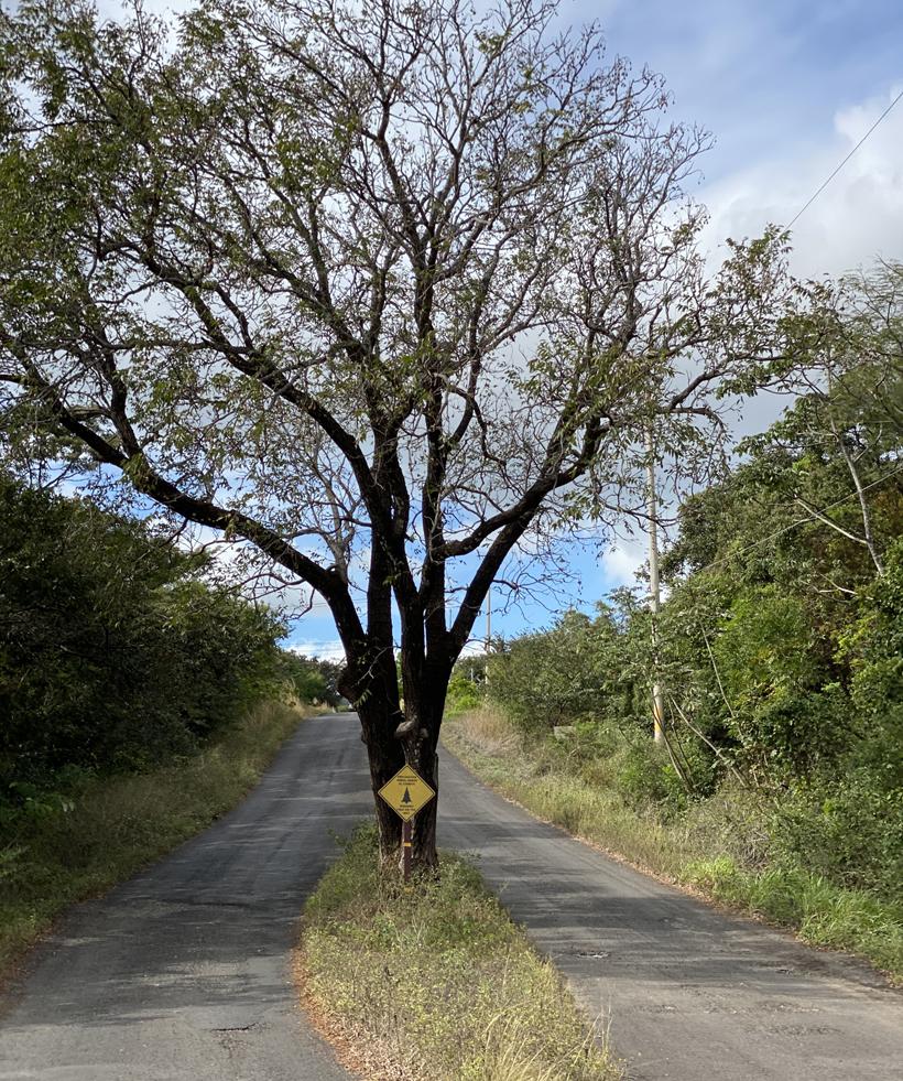 boom op de weg naar Rio Negro