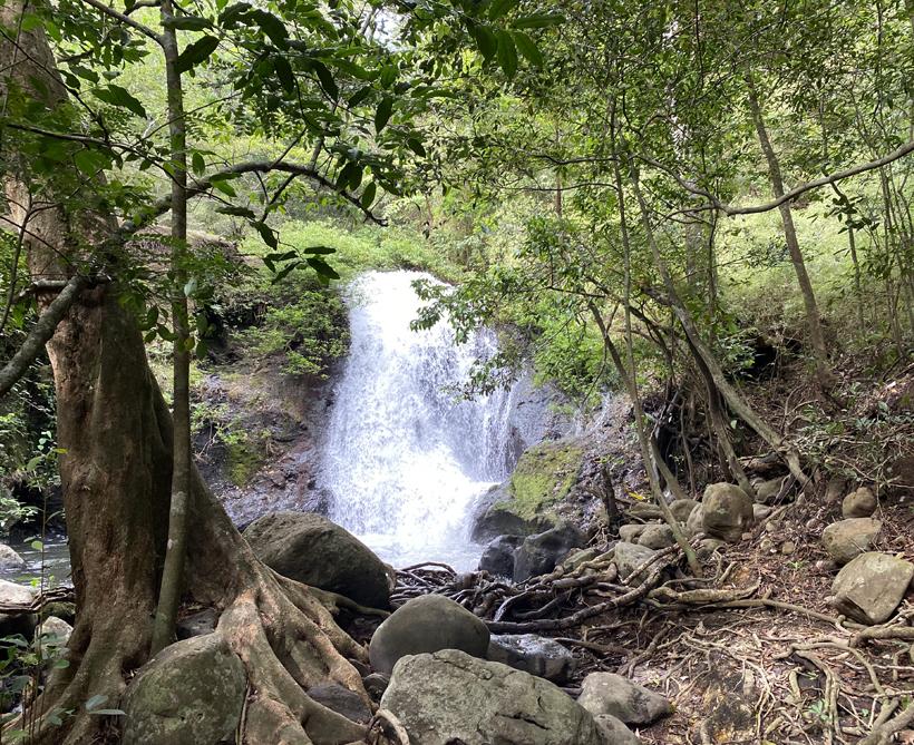 bospad naar waterval rio negro