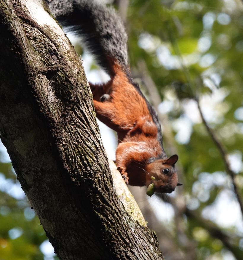 eekhoorn in Karen Mogensen