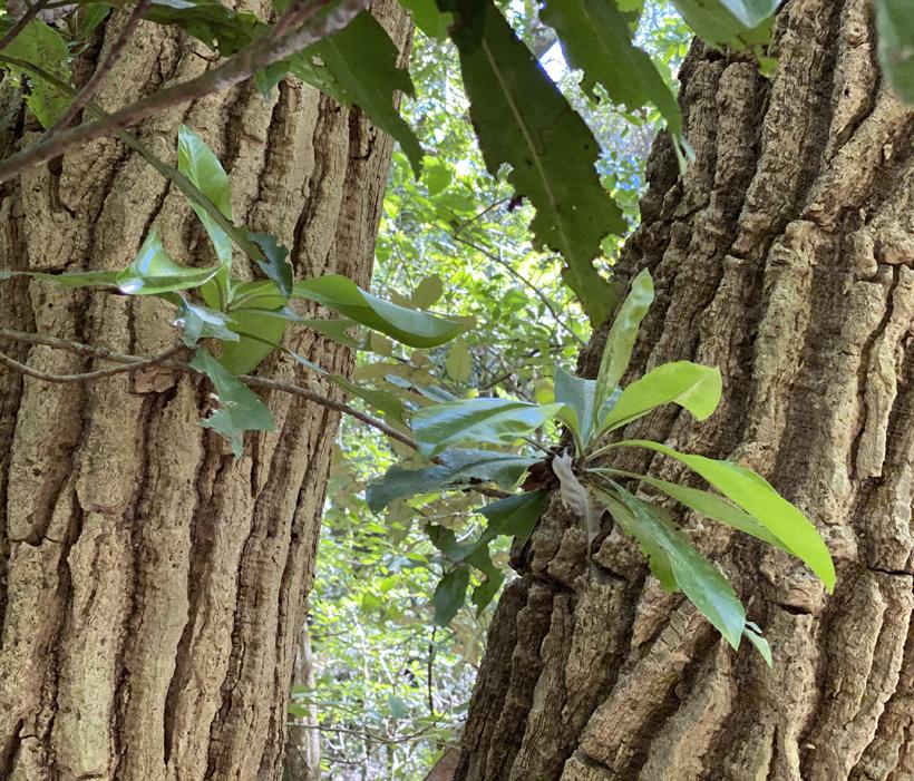 bomen in Diria Nationaal Park