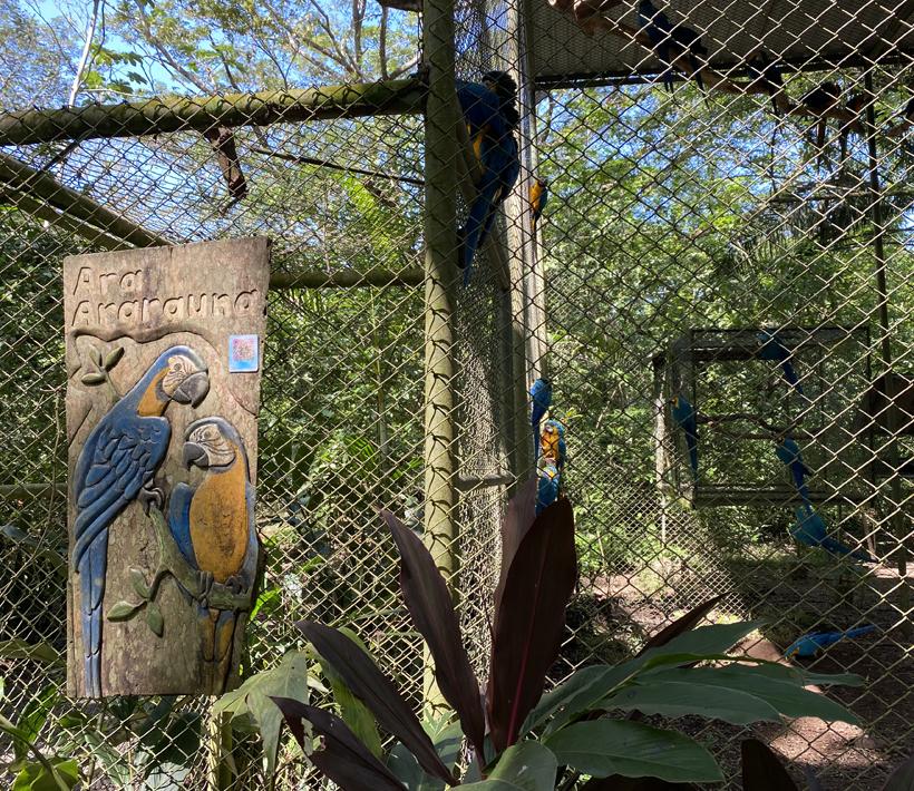 uitheemse papegaaien bij Natuwa