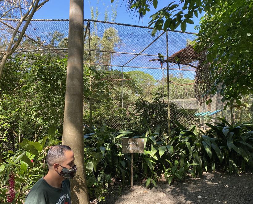 macaw kooi natuwa