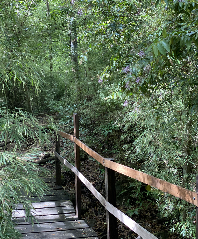naar Oropendola waterval