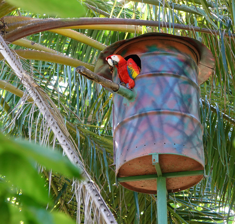 macaw in nest bij Natuwa