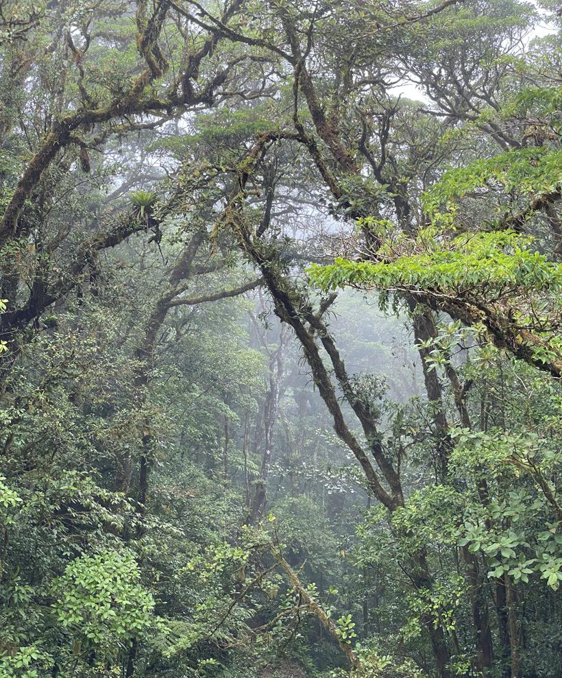 Nevelwoud Santa Elena in Monteverde