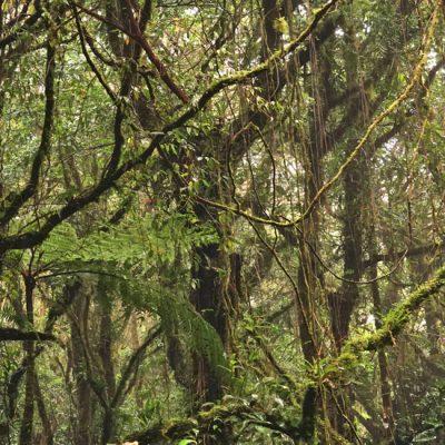 Hoe de magie van het nevelwoud in Monteverde beleven?