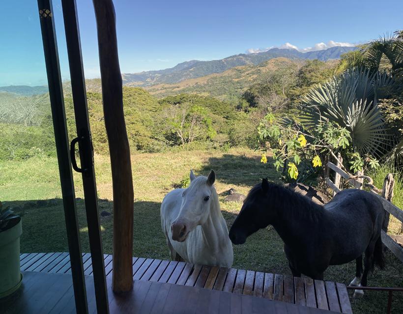 paarden in Finca Pipilacha