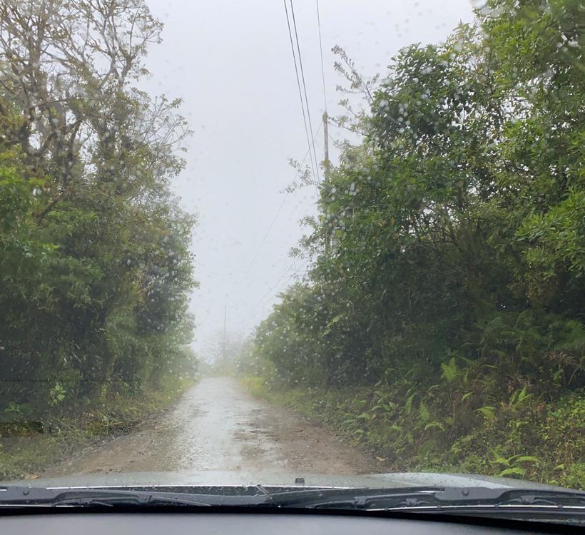 regen in Santa Elena Reserve