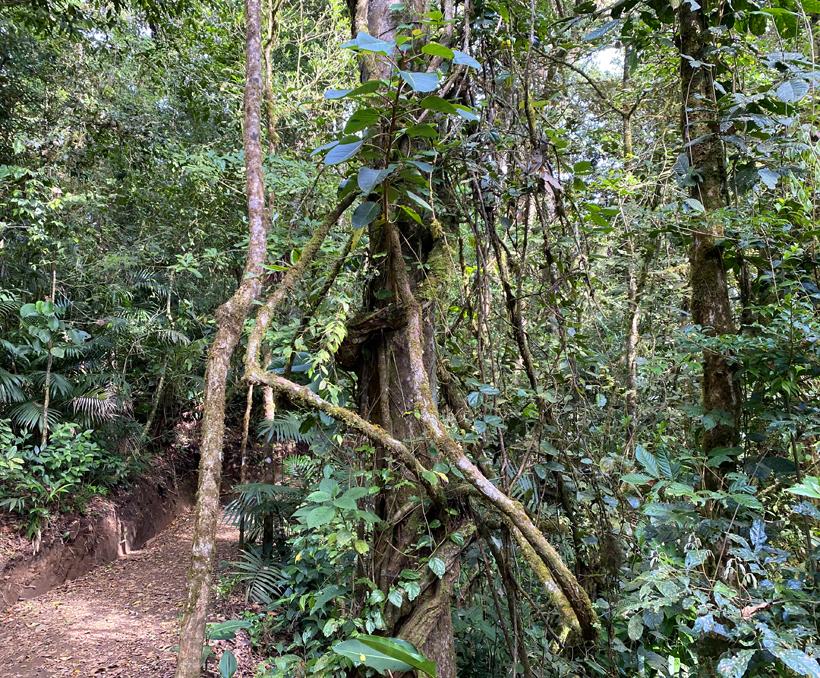 wandelpad in Curi Cancha