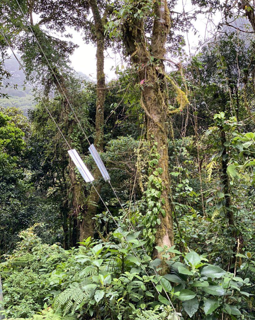 bescherming apen in nevelwoud