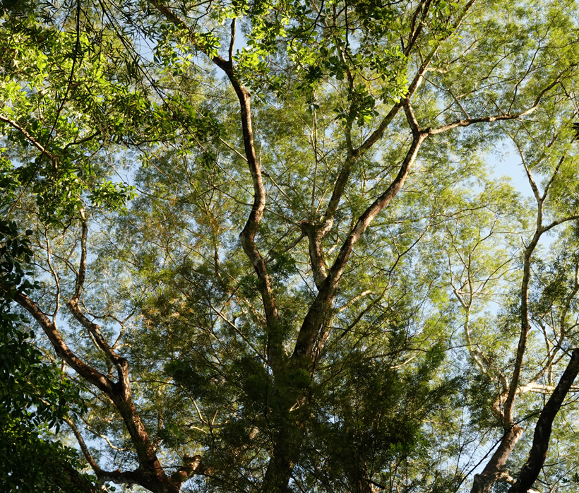Bomen in Karen Mogensen