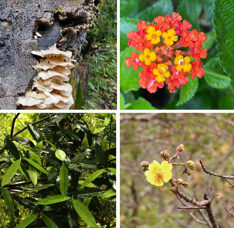 vegetatie in Rincon de la Vieja