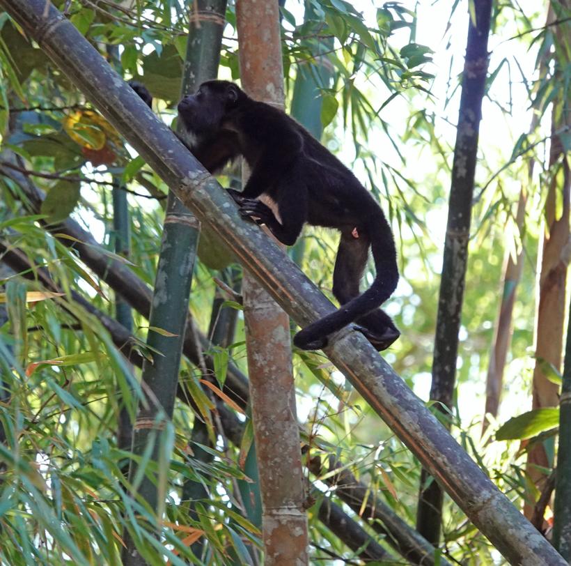 dieren in San Ramon de Rio Blanco