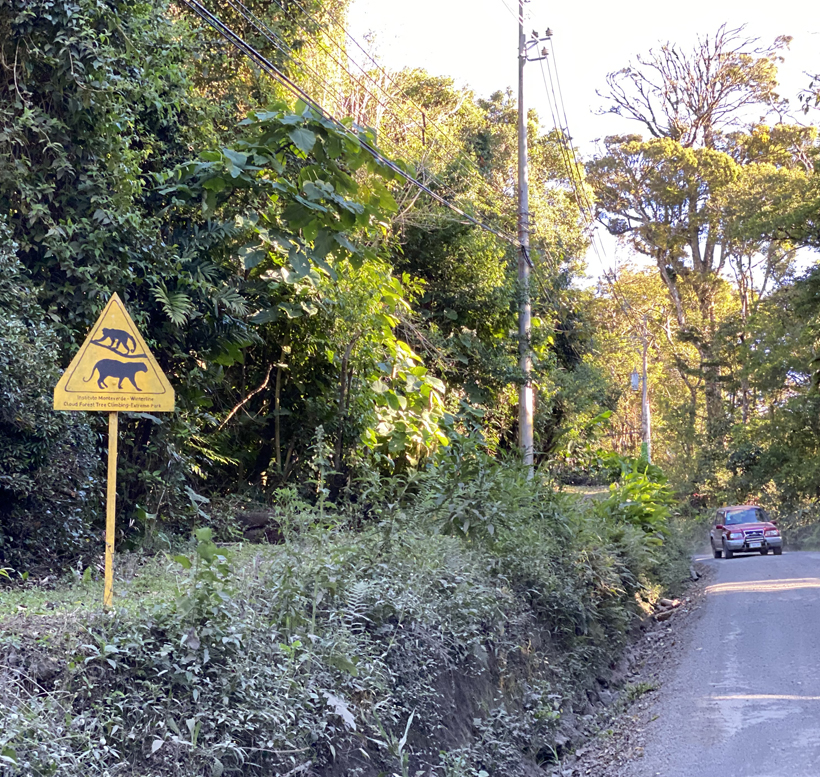 wildlife crossings monteverde