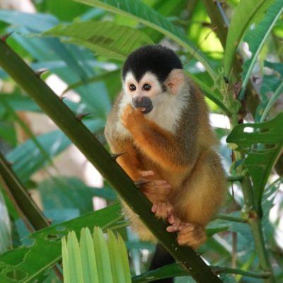 Piedras Blancas Nationaal Park en dieren helpen in Osa Wildlife