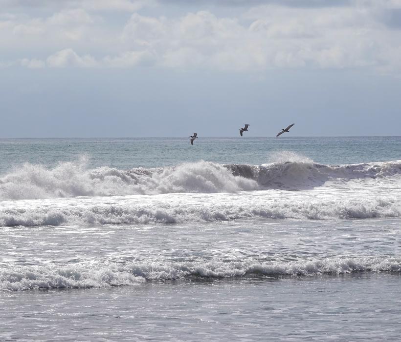 pelikanen zee Baru