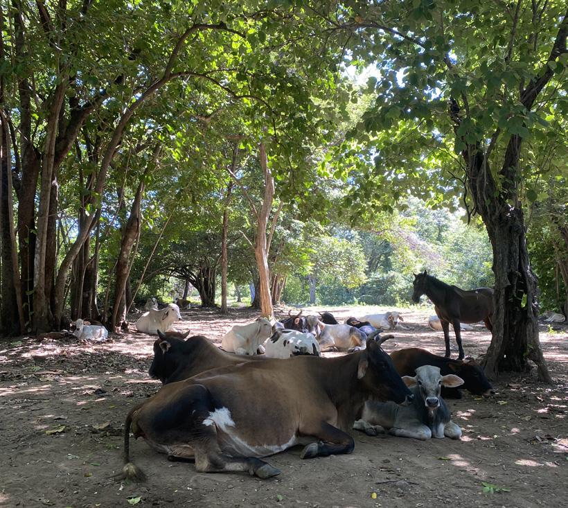van veeteelt naar natuurreservaat Junquillal
