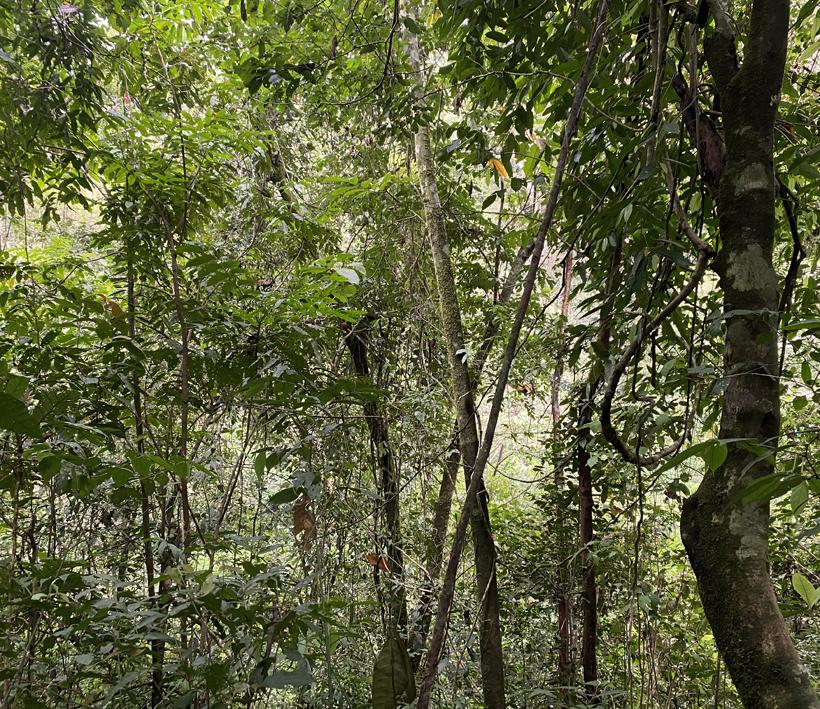 wandel in regenwoud van Dos Brazos