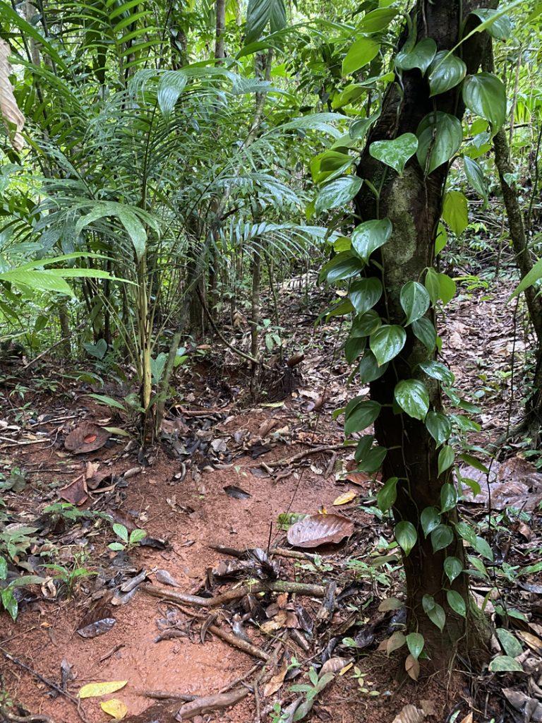 wandelen jungle suital lodge