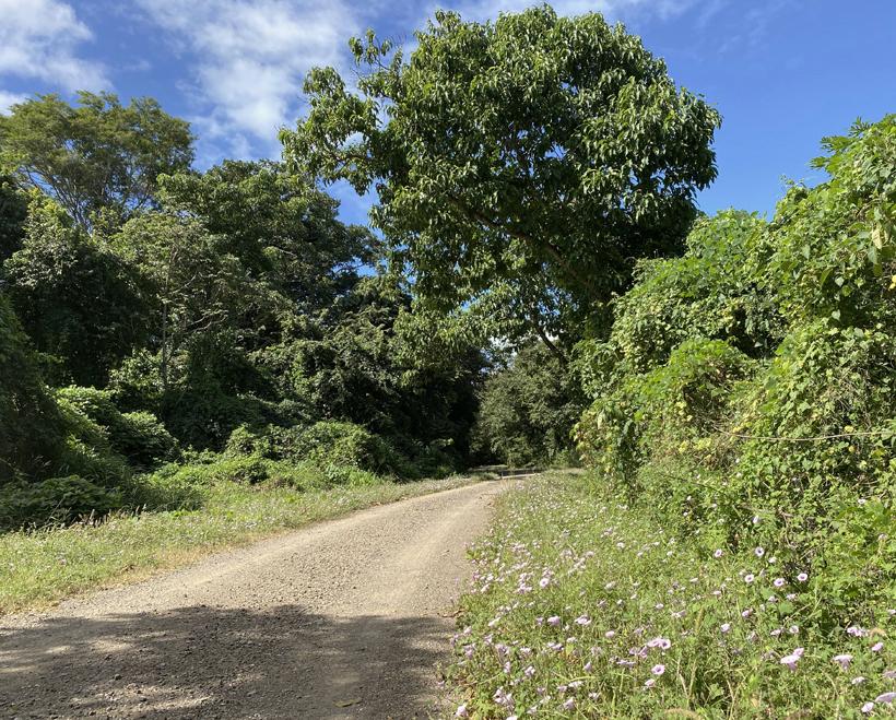 grindweg naar Santa Rosa Nationaal Park sector Murcielago