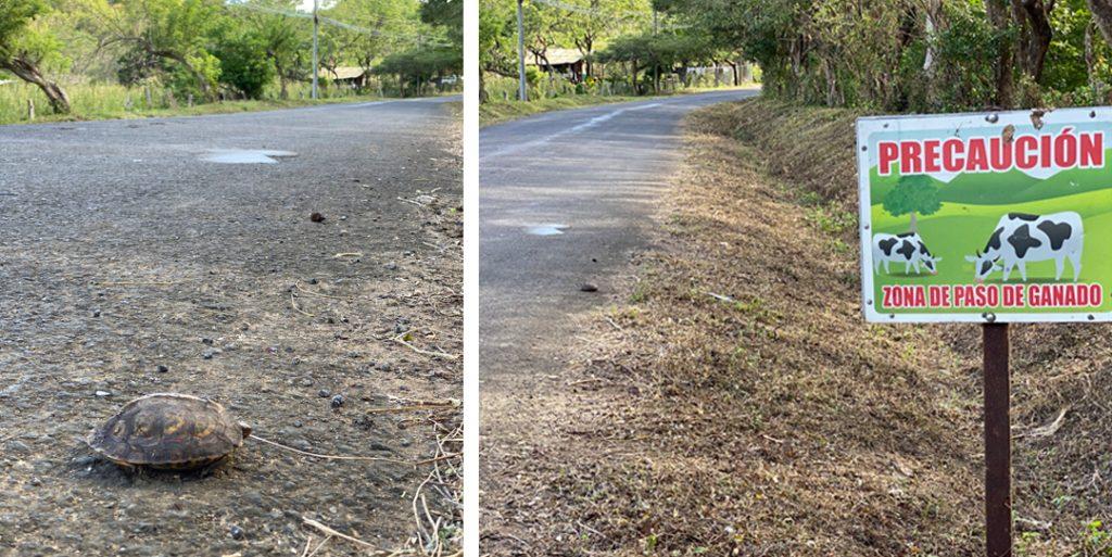 dieren op de weg in Costa Rica